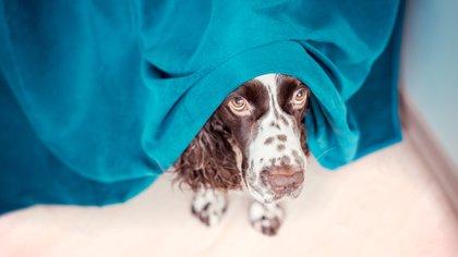 Los animales sufren por el uso de la pirotecnia (Foto: Shutterstock)