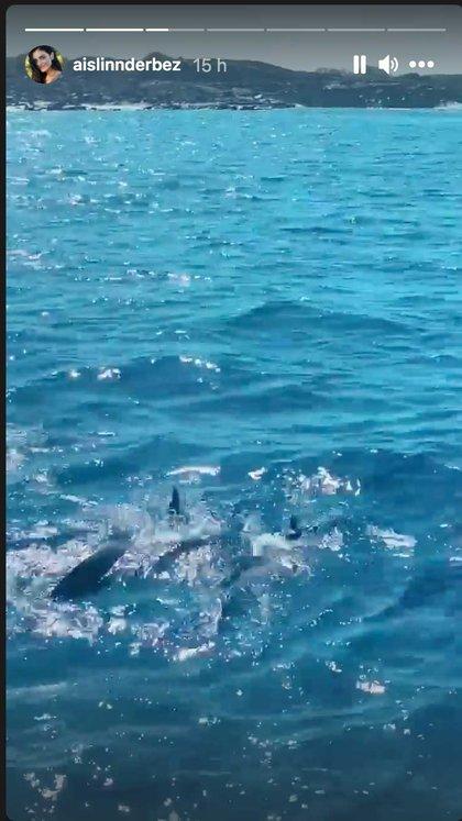 Aislinn compartió emocionada el avistamiento de delfines y ballenas (Foto: Instagram @aislinnderbez)