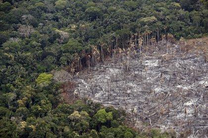 Fotografía de un terreno de selva deforestado, el 22 de febrero de 2020. EFE/Mauricio Dueñas/Archivo
