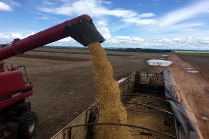 Un nuevo récord del precio externo de la soja. REUTERS/Roberto Samora/